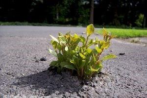 Pflanzen durchbrechen den Asphalt (Pixelio, Jörg Jansen)