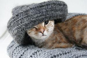 Katze in Schal und Mütze